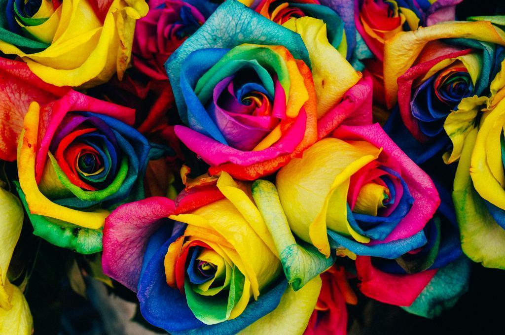 image roses